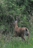 Young Buck Leaving