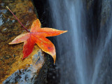 Leaf by Stream2 PC026083 wk1.jpg