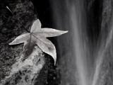 Leaf by Stream2 PC026083 wk1 bw.jpg