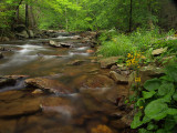 wHunting Creek2 June1 P5312150.jpg