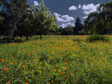 Landscapes Gallery #3