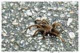 Spider - 02