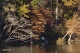 Fishing at River Bend