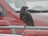 raven DeMoulas parking lot Rowley
