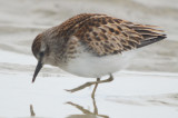 least sandpiper sandy point
