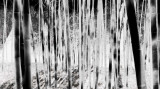 a walk in the ghost forest