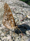 Unknown butterfly_3