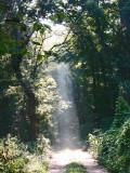 Spotlight on the Trail