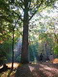 Morning rays pierce the trees
