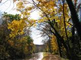 Luminous yellow across the trail