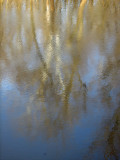 Reflections in the early morning flows