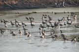 Geese at Big Pool
