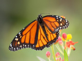 Bees, Butterflies and Wild Flowers at Black Hills
