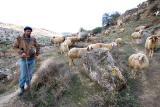 Shepherd - Jerusalem