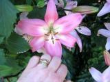 one flower so sweet