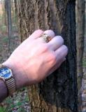 A Celtic & Native Tree of Life Hike