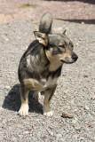 Hundar och hästar 20080601