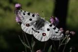 Butterflies and moths in Sweden