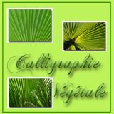 CALLIGRAPHIE VEGETALE
