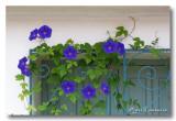 F3: Fers Feuilles Fleurs - Flowers