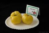 Lemon Gazzi.jpg