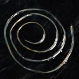 Gordian Worm