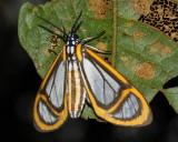 Lepidoptera of Ecuador