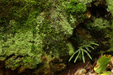 woody microhabitat