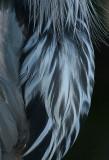 great blue heron 372