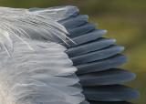 great blue heron 378