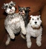 3  Crazy Pups