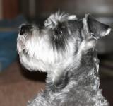 Sammy Profile