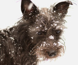 Allie in the snow