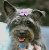 Allie wearing a bow