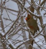 Hidden Birdie