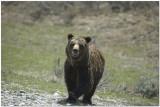 Grand Teton National Park May 2009