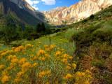Eastern Sierra 2005-2008