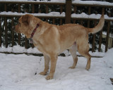 Our Dog GlindaJanuary 25, 2011