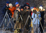 Yellow-browed Bunting twitchers