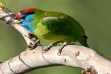 Birds from Pakistan