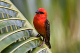 Birds from Mauritius