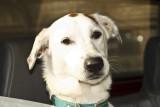 Dog_6445RAW.jpg