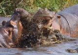 Hippo disagreement