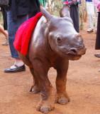 Maalim, orphan Black Rhino