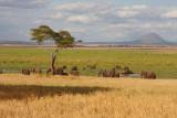 Elephants in Silale Swamp