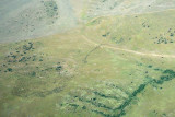 Wildebeest Herd from the air