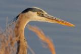 Wading Birds (updated 4-4-09)