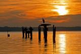 Great Blue Heron Sunrise on the Potomac
