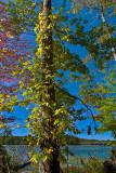Leesylvania State Park Early Fall