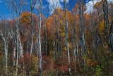 Fall at Leesylvania State Park